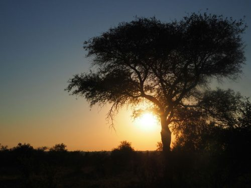 Mbazi Safaris - Kruger National Park Tour Operator Sunset Game Drives Kruger National Park