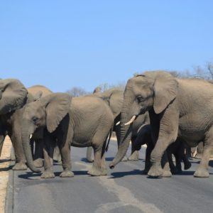 Mbazi Safaris Elephant Interaction and Elephant rides in Hazyview, Mpumalanga